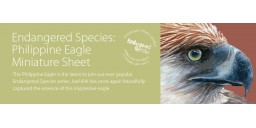Endangered Species Philippine Eagle