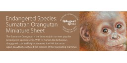 Endangered Species Sumatran Orangutan