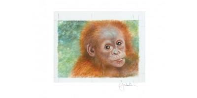 Joel Kirk Print - Sumatran Orangutan