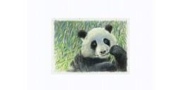 Joel Kirk Print - Giant Panda