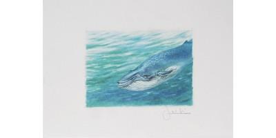 Joel Kirk Print - Blue Whale