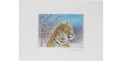 Joel Kirk Print - Amur Leopard Face