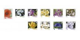 Raymond Evisons Wild Flora 2