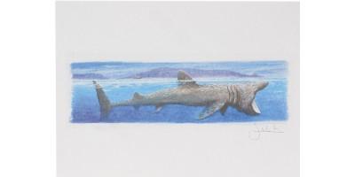 Joel Kirk Print - Basking Shark