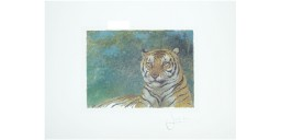 Joel Kirk Print - Bengal Tiger in green leaves