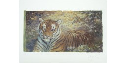 Joel Kirk Print - Bengal Tiger in brown leaves