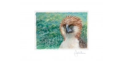 Joel Kirk Print - Philippine Eagle