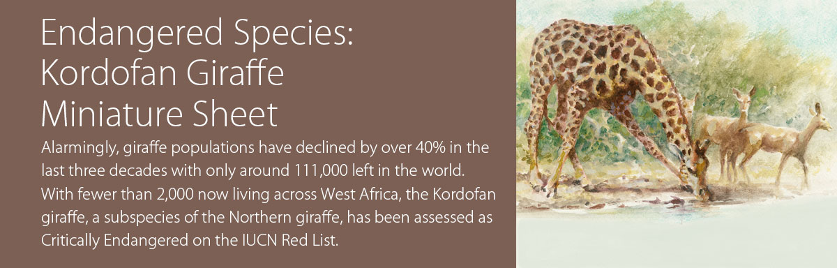 Endangered Species: Kordofan Giraffe