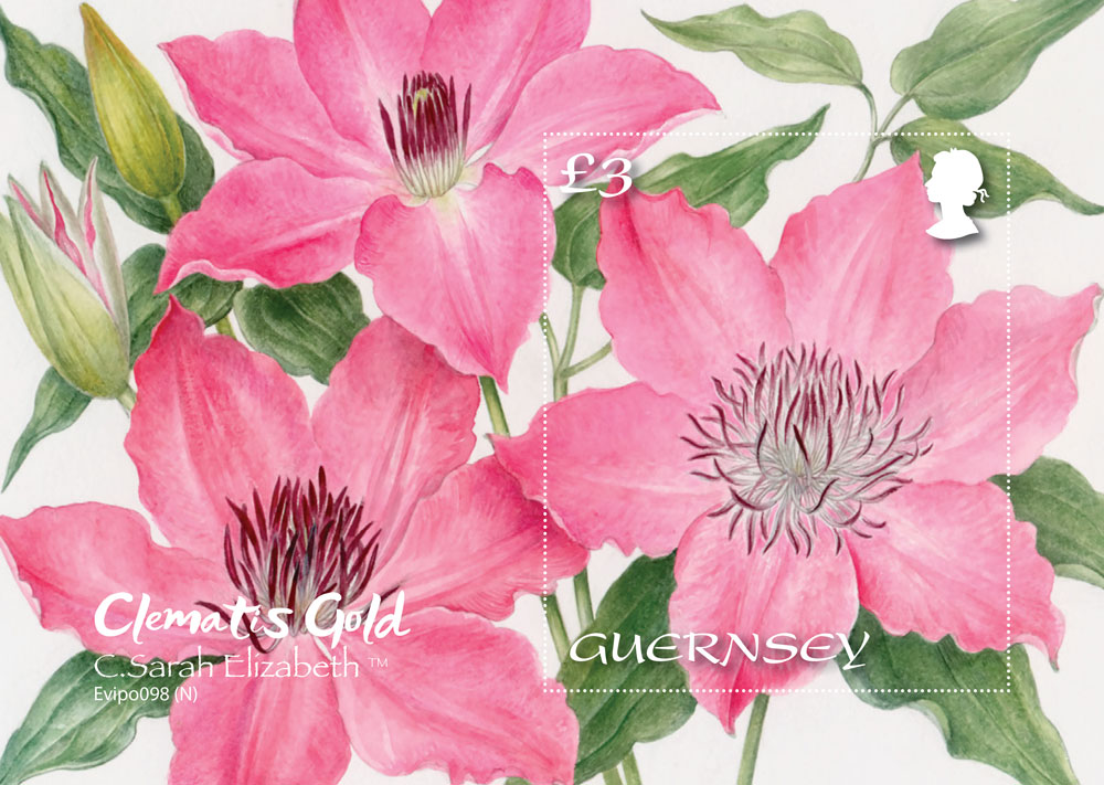 Award-winning Clematis to feature on new miniature sheet series