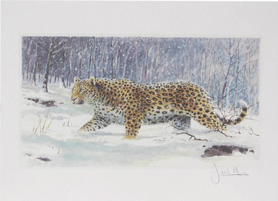 Joel Kirk Print - Amur Leopard