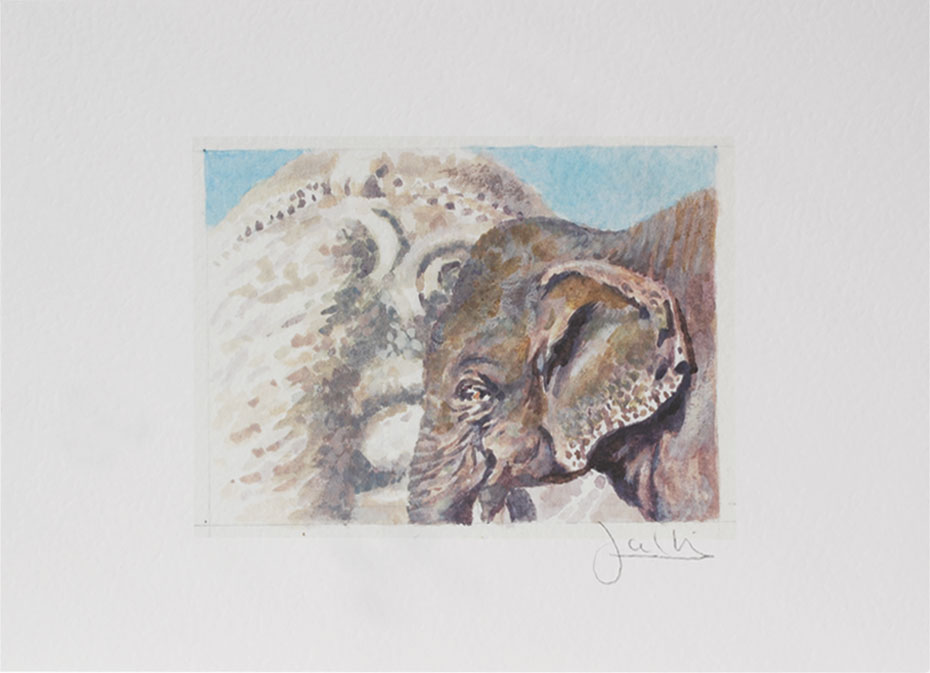 Joel Kirk Print - Asian Elephant
